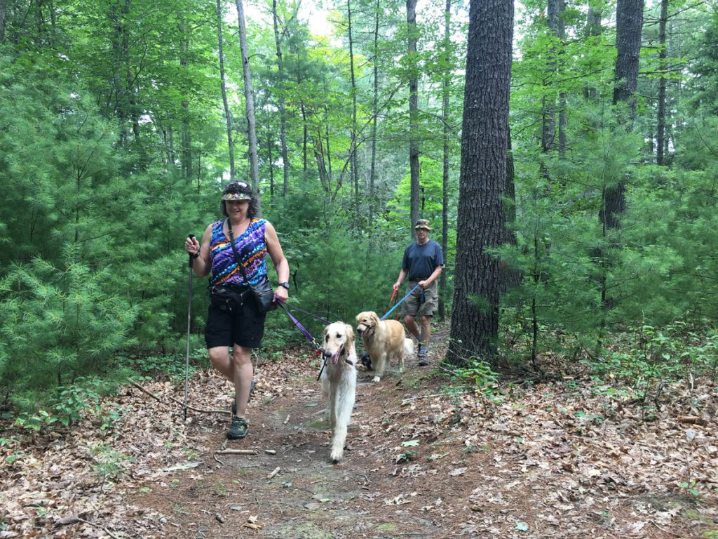 Miles of hiking trails surround White Sulphur Springs.